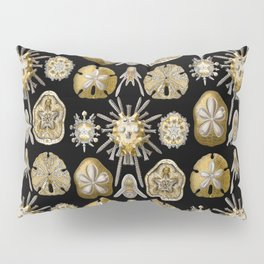 Ernst Haeckel - Scientific Illustration - Echinidea (Sea Urchins) Pillow Sham