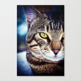 Bengal Tom Tabby Cat Portrait Canvas Print