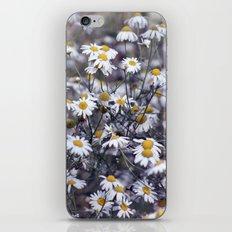 Wild Daisies Field 4130 iPhone & iPod Skin