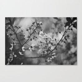 Shadows of Spring Canvas Print