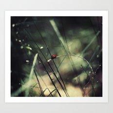 Biedronka....Ladybug Art Print