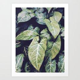 Jungle leaf - vintage Art Print
