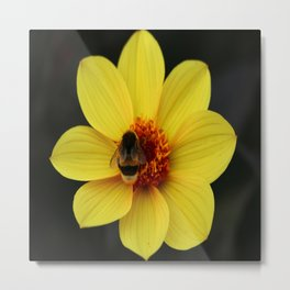 Dahlia  with Bumble Bee Metal Print