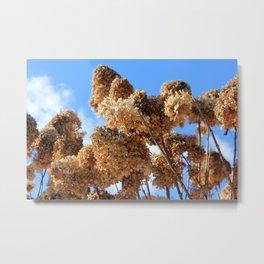 Winter Scene - Hydrangea Sky Metal Print