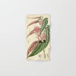 Begonia falcifolia Hand & Bath Towel