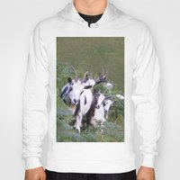 goat Hoodies featuring Goat by Jessie Prints Stuff