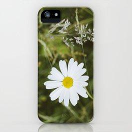 Flower. Oxeye Daisy (Leucanthemum vulgare) growing wild. iPhone Case