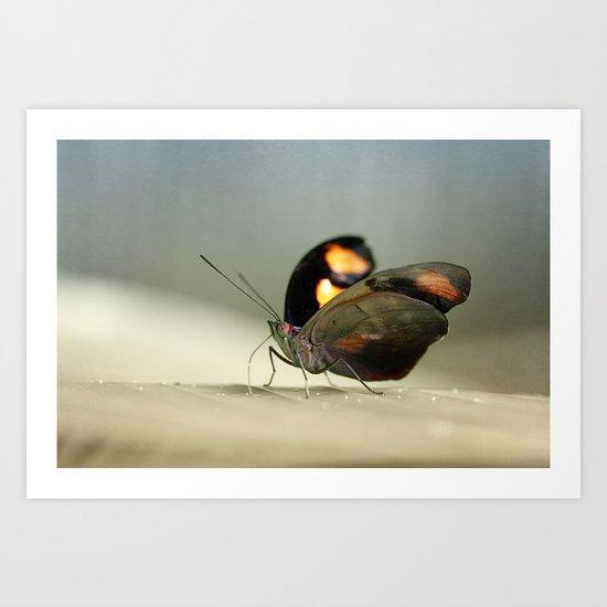 Abalone Wings 2 Art Print