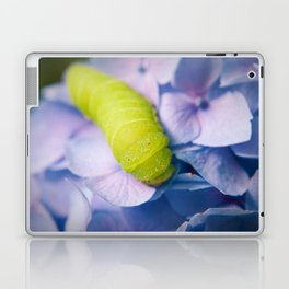Actias Luna Larva on Hydrangea Nature Photo Laptop & iPad Skin