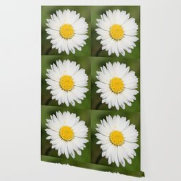 Closeup of a Beautiful Yellow and Wild White Daisy flower Wallpaper