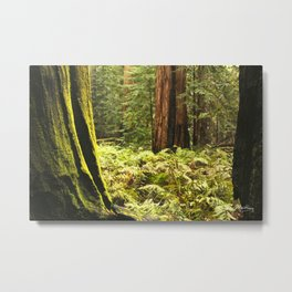 Fern footing Metal Print