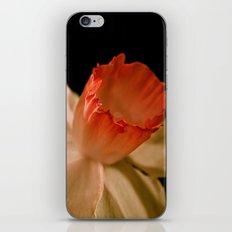 Orange and white Daffodil iPhone & iPod Skin