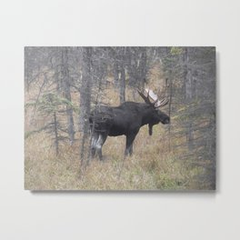 Moose on the Murray Metal Print