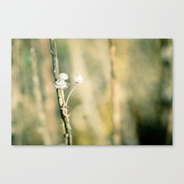 Sweet as Sugar Canvas Print
