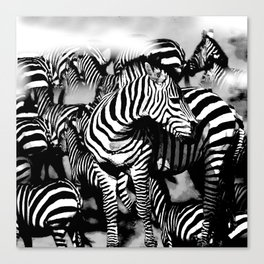 ZEBRA: GO YOUR OWN WAY Canvas Print