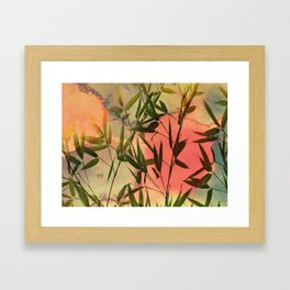 sunset bamboo Framed Art Print