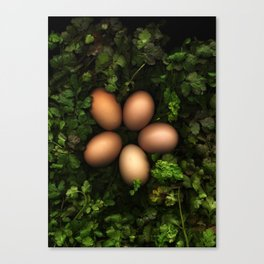 Eggs in a Green Nest Canvas Print
