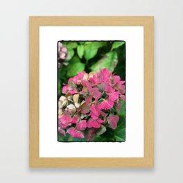 Hiodrainsia Framed Art Print