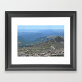 Pensive Mountain Goat on the Rocky Mountains Framed Art Print