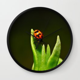 An Orange Ladybird Walking Down A Pointy Succulent Wall Clock