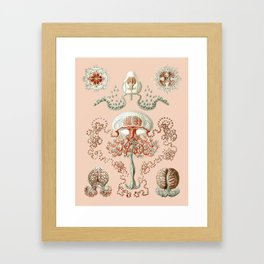 Ernst Haeckel - Jellyfish Scientific Illustration Framed Art Print