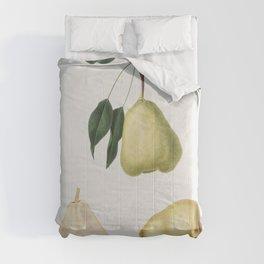 Pear (Pyrus communis) from Pomona Italiana (1817 - 1839) by Giorgio Gallesio (1772-1839) Comforters