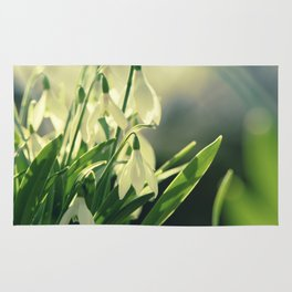 Snowdrops impression from the garden Rug