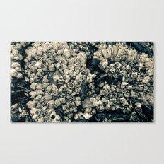 Barnacles Canvas Print