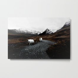 SHEEP - MOUNTAINS - SNOW - ROAD - PHOTOGRAPHY - FUNNY Metal Print