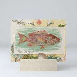Vintage Red Snapper Fish Illustration (1889) Mini Art Print