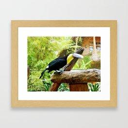 Curious Toucan Framed Art Print