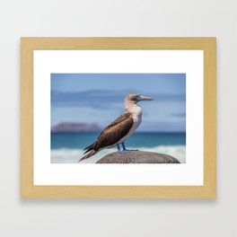 Galapagos blue footed booby bird photography Framed Art Print