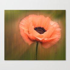 Soft Pink Poppy Canvas Print
