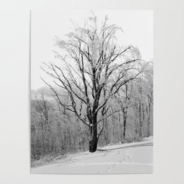 Maple Tree in Winter Poster