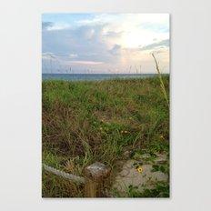 Beach Daisies Canvas Print