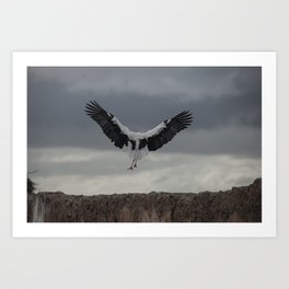 Spread your wings and land Art Print