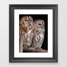 Tawny Owls in Nature Framed Art Print
