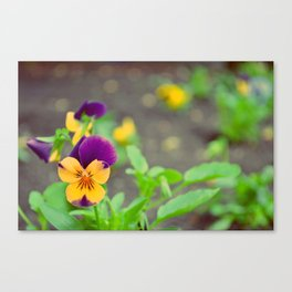 Purple Flowers in Early Spring Canvas Print