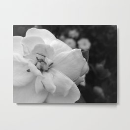 In White Metal Print
