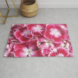 Close-up of Dianthus Flowers Rug