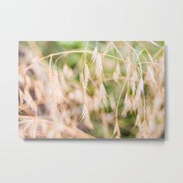 Wheat Grass Metal Print