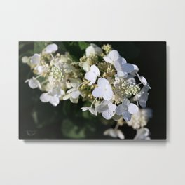 White Blossoms With Raindrops Metal Print