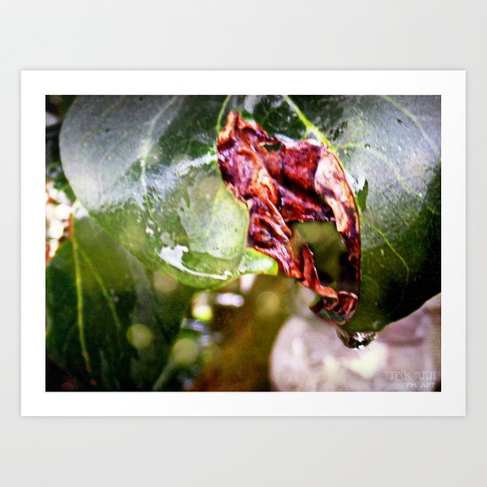 Sensual leaves Art Print