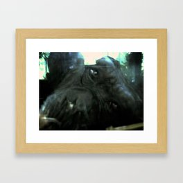 Chimp Framed Art Print