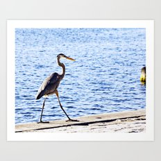 Blue Heron Strut Art Print