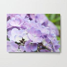 Light Purple Hydrangea Metal Print