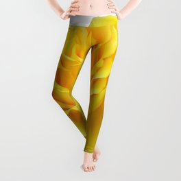 Beautiful Yellow Rose Closeup Isolated on White Leggings
