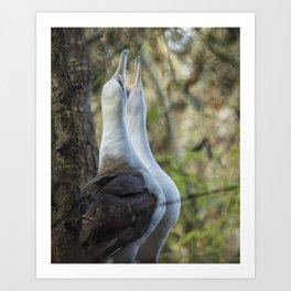 Laysan Albatrosses in Love Art Print