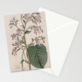 Flower 288 borago orientalis Oriental Borage13 Stationery Cards
