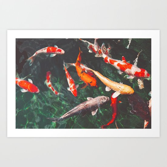 Koi Carp Fish by stuarthampton